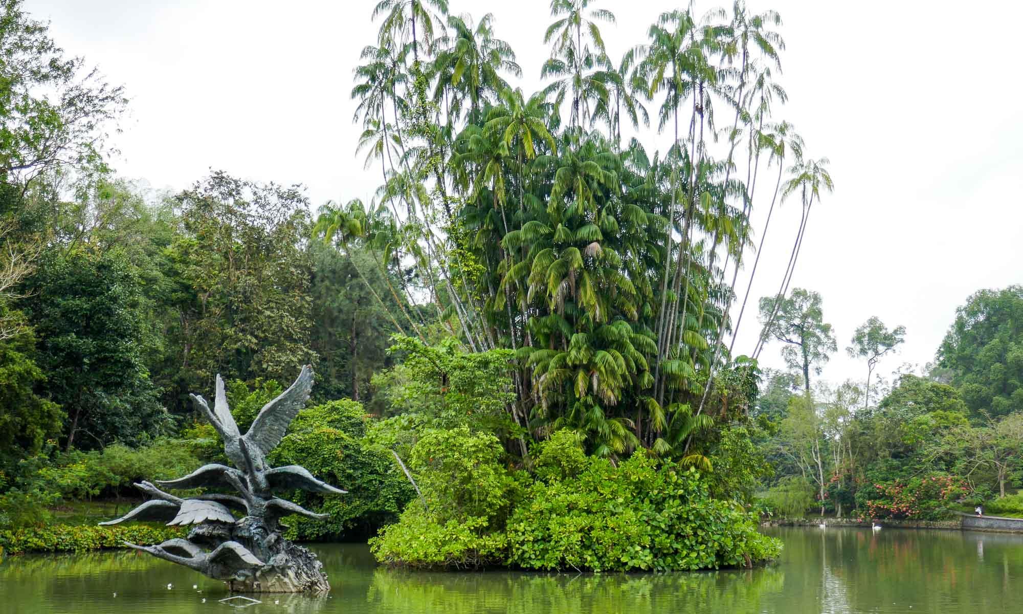 Swan Lake, Botanic Gardens, Singapore