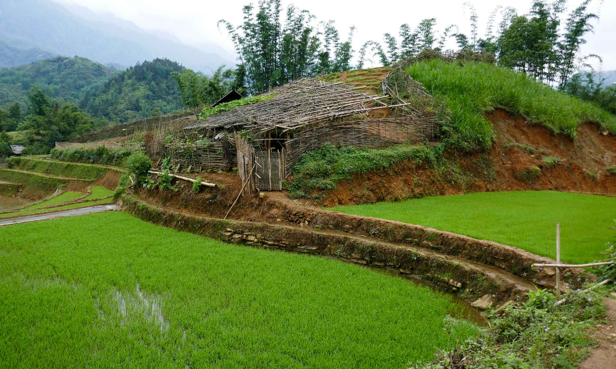 More rice terraces on the way to Lao Chai