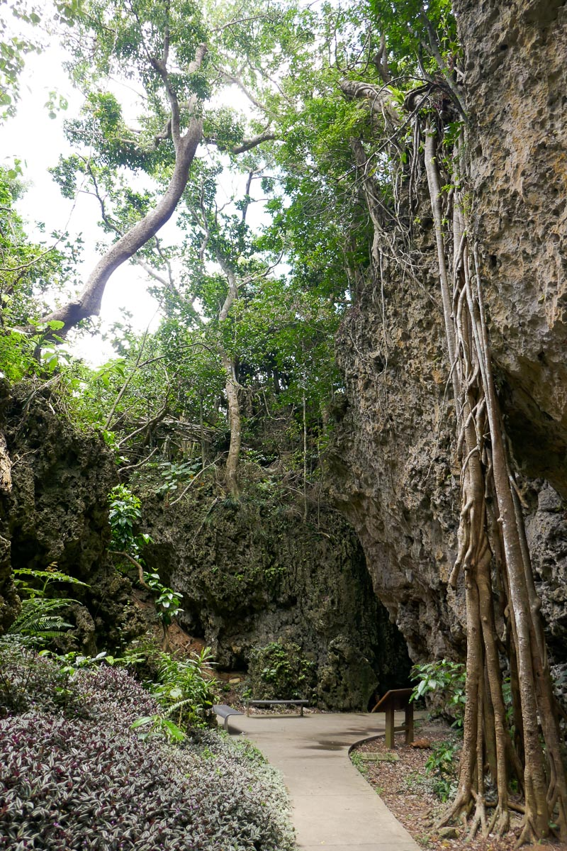 The valley of Hanging Banyan