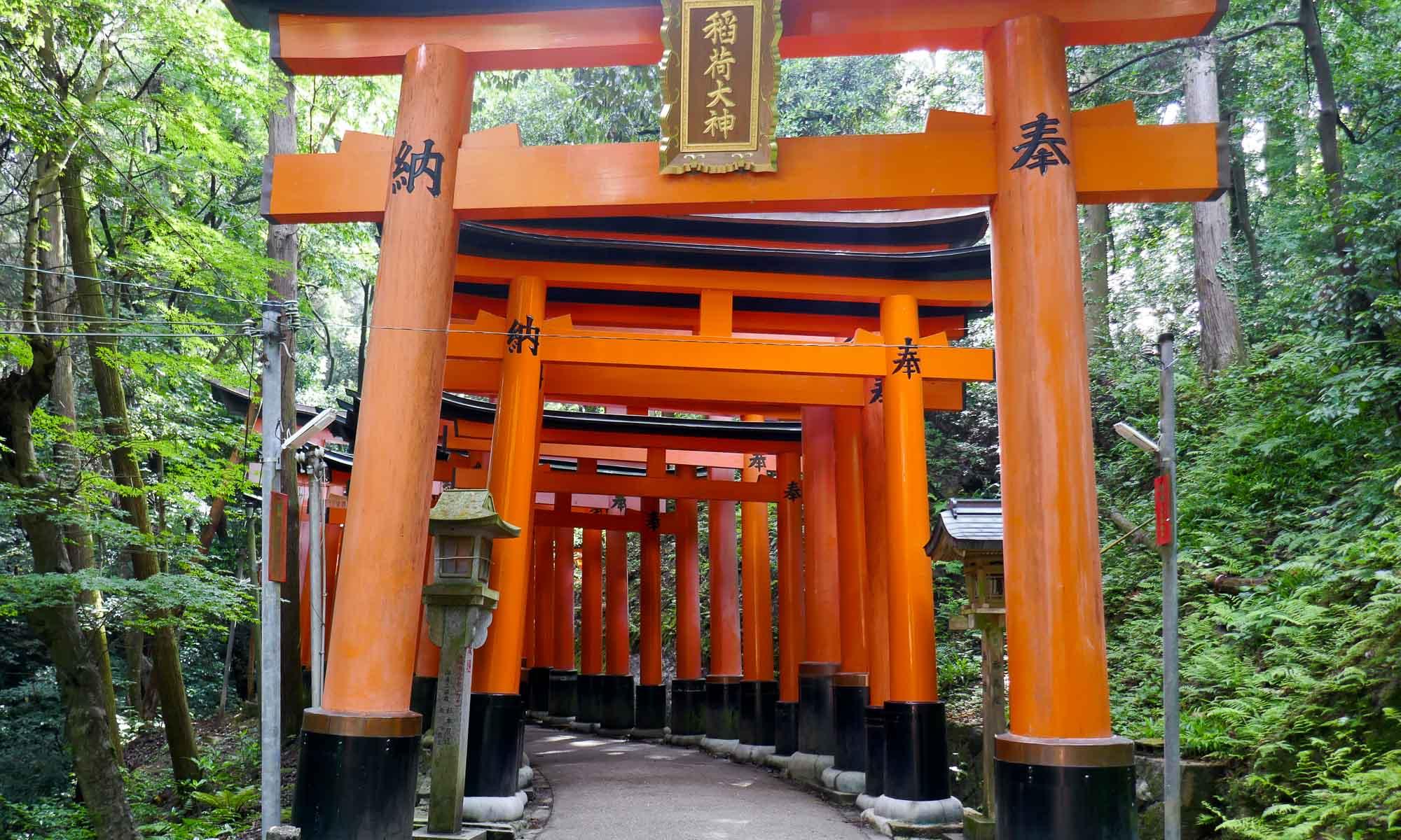 A set of large torii