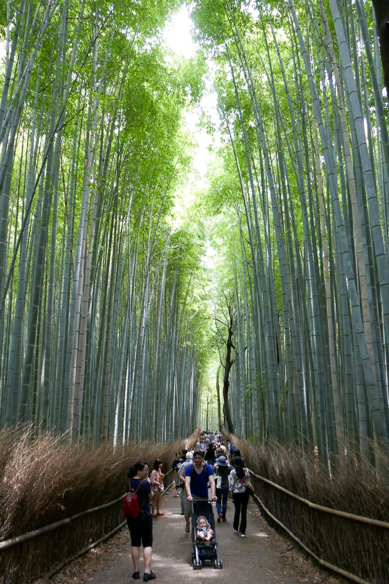 Crowded bamboo forest