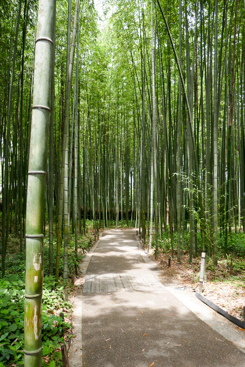 But the Bamboo Forest Trail a little further was more quiet